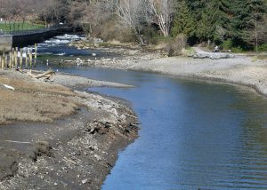 Holly Street Landfill Whatcom Creek estuary restoration
